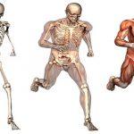 Un capítulo oscuro en la historia de la Anatomía médica